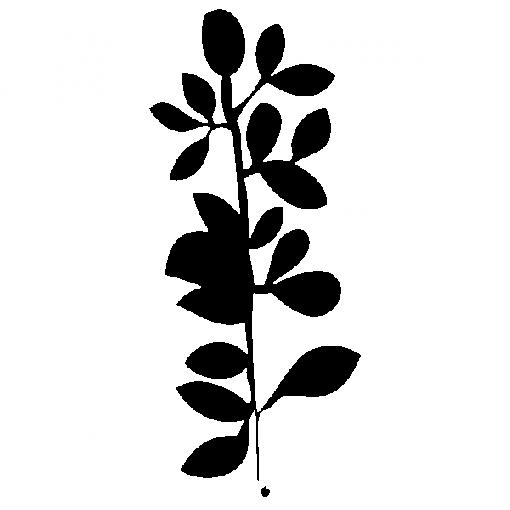 SOPHORABRANCH