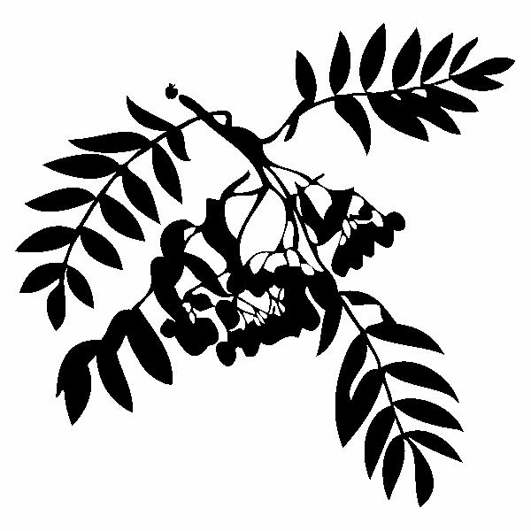 ELDERBERRYLEAVE