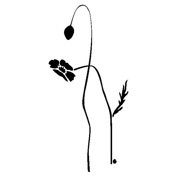 POPPYBUDANDFLOWER
