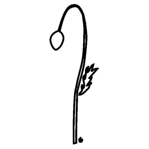 POPPYBUDOUTLINE